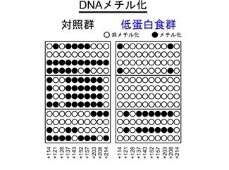 DNAメチル化の比較