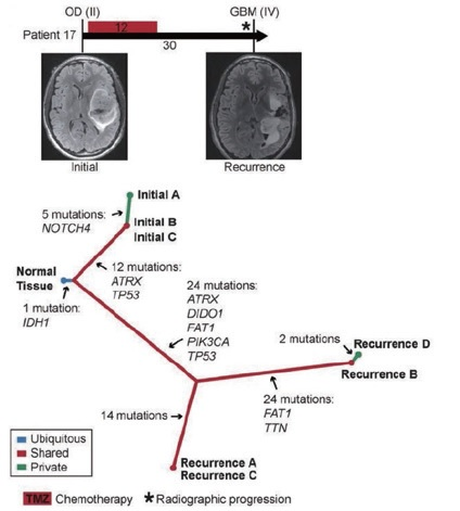 Clonal evolution in glioma progression