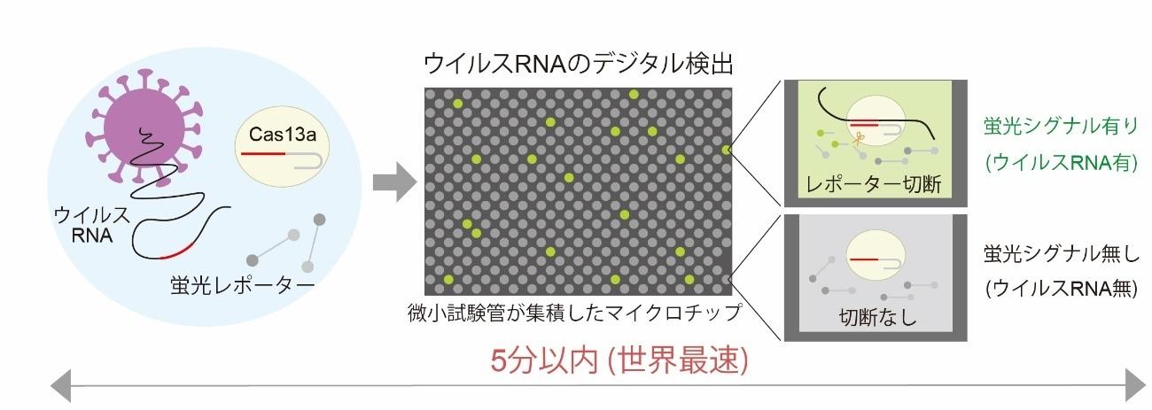 図2 SATORI法によるウイルスRNAのデジタル検出原理